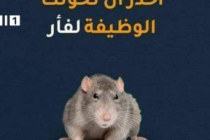 إحذر أن تحولك الوظيفة إلى فأر