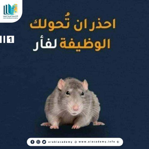 احذر أن تحولك الوظيفة إلى فأر
